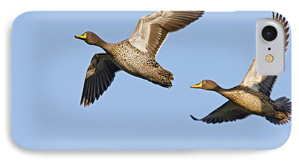 Yellow-billed Duck Anas Undulata Pair IPhone Case