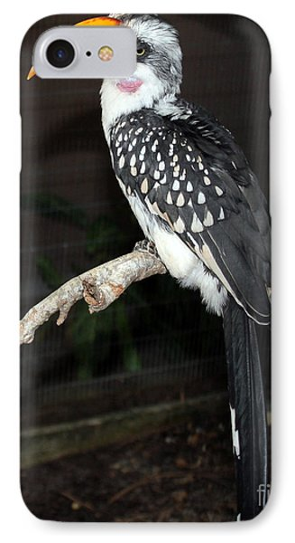 IPhone Case featuring the photograph Yellow-billed Hornbill by Kathy  White