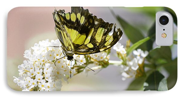 Yellow Butterfly Beauty IPhone Case by Andrea Hazel Ihlefeld