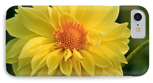 IPhone Case featuring the photograph Yellow Dahlia by Ann Murphy