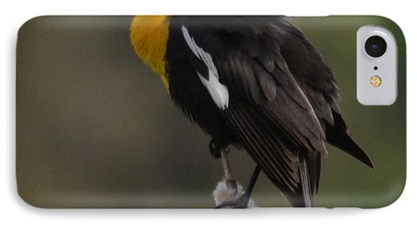 Yellow-headed Blackbird IPhone Case by Ansel Price
