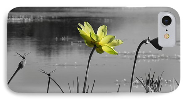 IPhone Case featuring the photograph Yellow Lotus by Deborah Smith