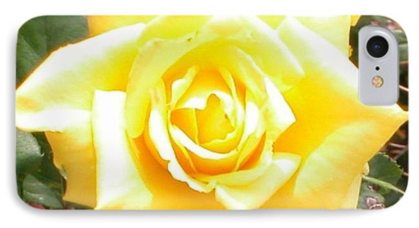 Yellow Rose At High Noon Phone Case by Alys Caviness-Gober