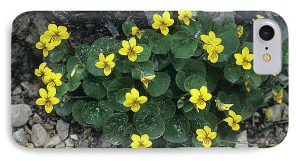 Yellow Wood Violet Flowers, Viola Biflora Phone Case by Bob Gibbons