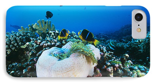 Yellowtail Anemonefish By Their Anemone Phone Case by Alexis Rosenfeld