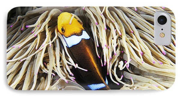 Yellowtail Anemonefish In Its Anemone IPhone Case by Alexis Rosenfeld