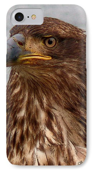 Young Bald Eagle Portrait IPhone Case