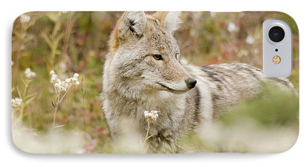 Young Coyote Canis Latrans In A Forest Phone Case by Philippe Widling