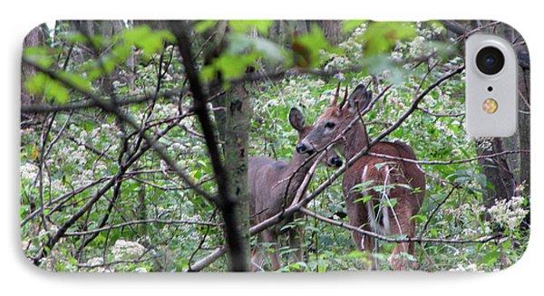 Young Deer In Flossmoor Forest IPhone Case by Cedric Hampton