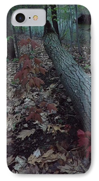 IPhone Case featuring the photograph Young Maple At The Swamp by Gerald Strine