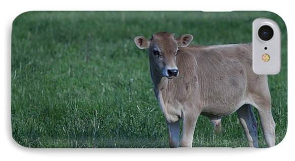 IPhone Case featuring the photograph Young Moo by John Crothers