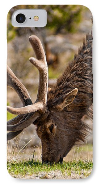 Young One IPhone Case by Colleen Coccia