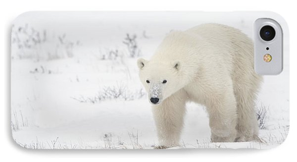 Young Polar Bear Ursus Maritimus Walks Phone Case by Richard Wear