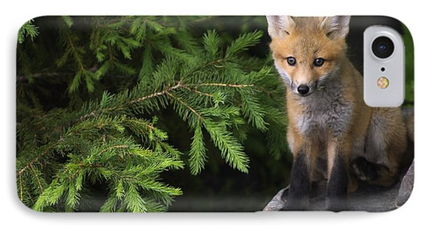 Young Red Fox On A Rock With Evergreen IPhone Case