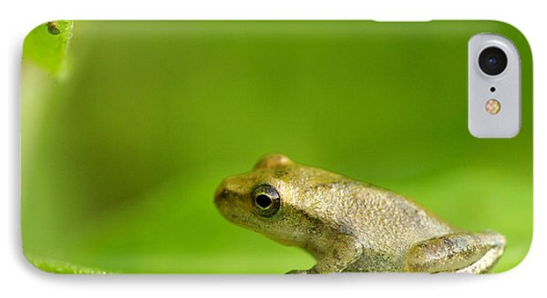 Young Spring Peeper Pseudacris Crucifer IPhone Case by Steeve Marcoux