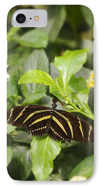 Zebra Butterfly IPhone Case by Marianne Campolongo