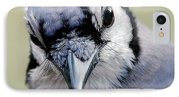 Blue Jay Phone Case by Skip Willits