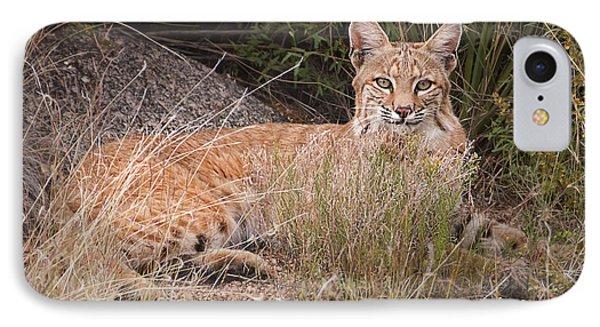 Bobcat At Rest IPhone Case by Alan Toepfer