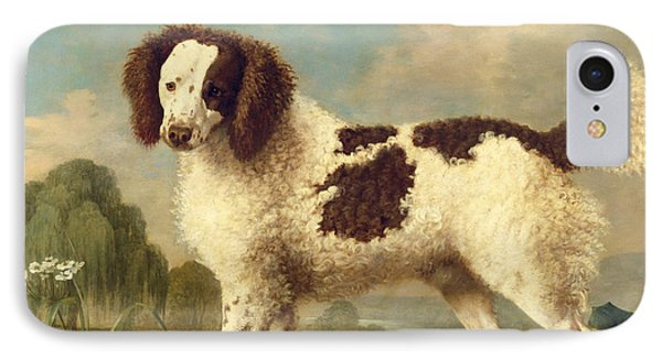 Brown And White Norfolk Or Water Spaniel IPhone Case by George Stubbs
