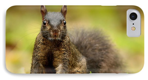 Curious Black Squirrel Phone Case by Mircea Costina Photography