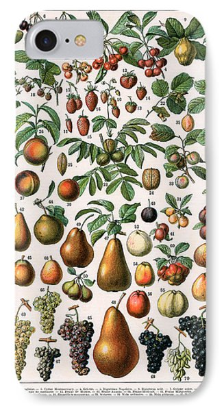 Illustration Of Fruit Varieties IPhone Case by Alillot