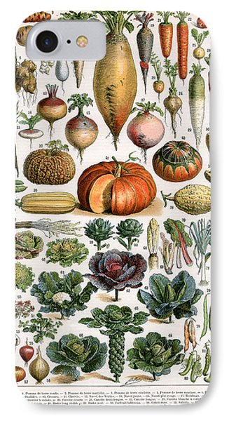 Cabbage iPhone 7 Case -  Illustration Of Vegetable Varieties by Alillot