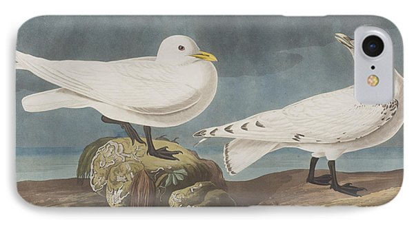 Ivory Gull IPhone Case by John James Audubon