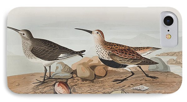 Red Backed Sandpiper IPhone Case by John James Audubon