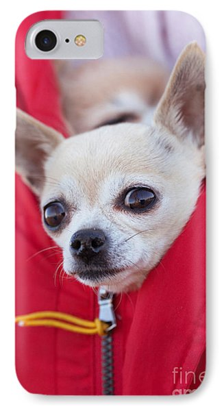 Chihuahua IPhone Case by Allan Wallberg
