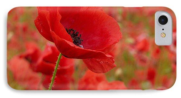 Red Poppies 3 IPhone Case by Jouko Lehto