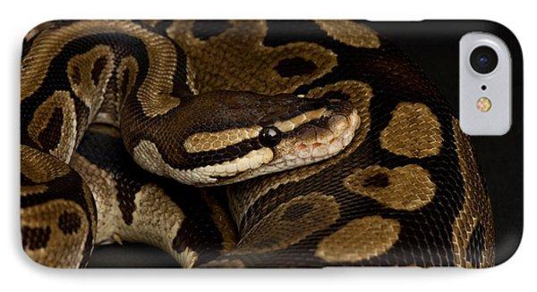 Burmese Python iPhone 7 Case - A Ball Python Python Regius by Joel Sartore