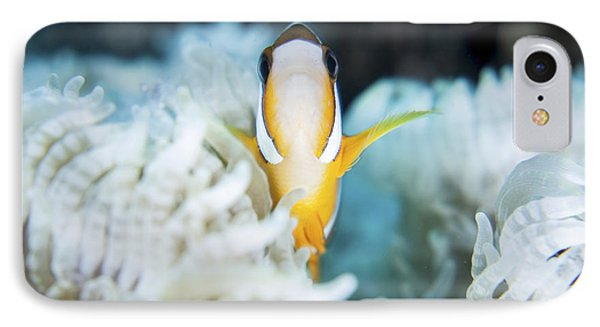 A Clarks Anemonefish Snuggles Amongst IPhone Case by Ethan Daniels