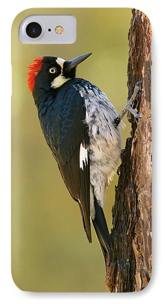 Acorn Woodpecker Phone Case by Doug Herr