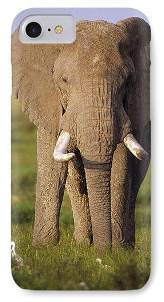 African Elephant Loxodonta Africana Phone Case by Gerry Ellis