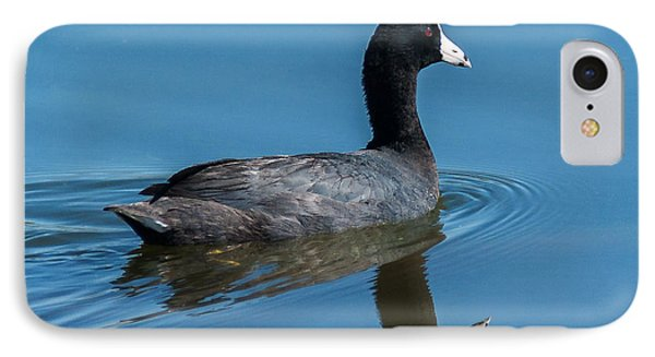 American Coot Swiming IPhone Case