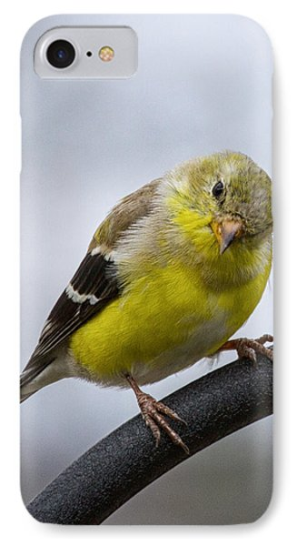 American Goldfinch IPhone Case by Brian Caldwell
