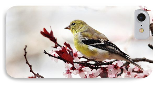 American Goldfinch In Spring IPhone Case by Trina Ansel