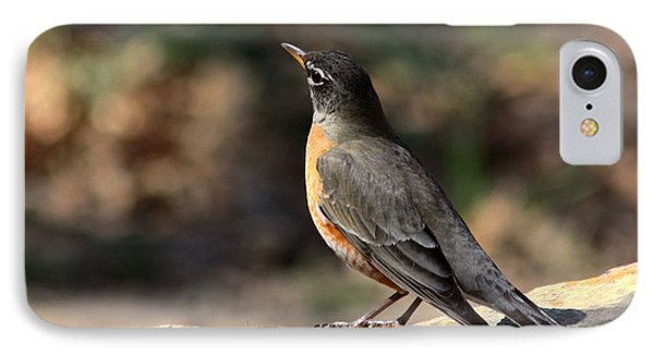 American Robin On Rock IPhone Case by Sheila Brown
