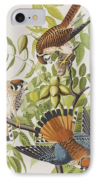 American Sparrow Hawk IPhone Case by John James Audubon