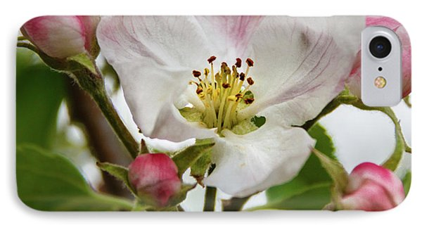 Apple Blossom IPhone Case by Robert Bales