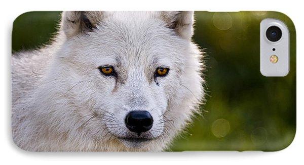 Arctic Wolf Portrait IPhone Case by Michael Cummings