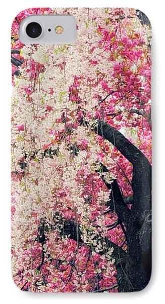 Asian Cherry Vignette IPhone Case by Jessica Jenney