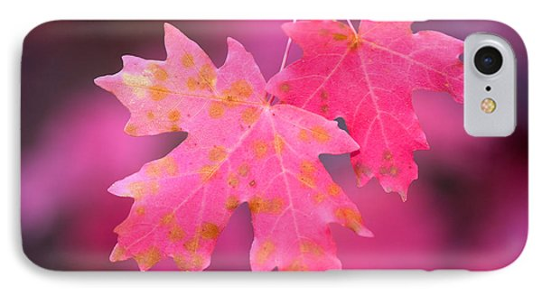 Autumn Color Maple Tree Leaves IPhone Case by Panoramic Images