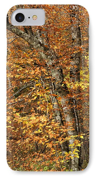 Autumn Colors IPhone Case by Andrew Soundarajan