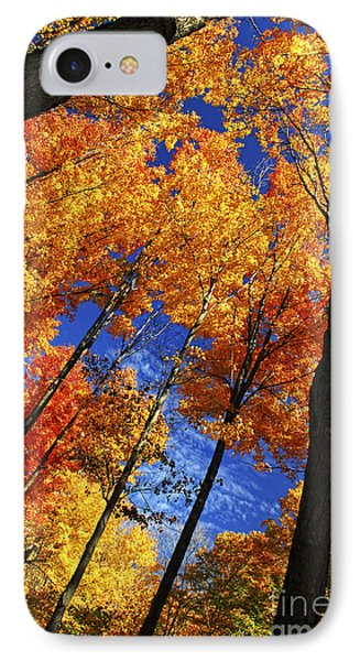 Autumn Forest Phone Case by Elena Elisseeva