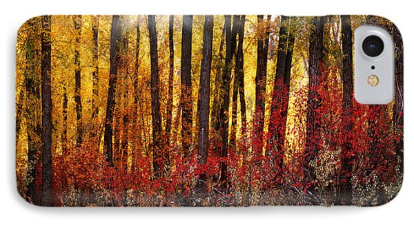 Autumn Light IPhone Case by Leland D Howard