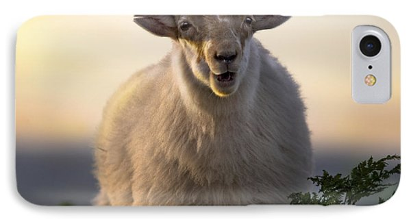 Sheep iPhone 7 Case - Baa Baa by Angel Ciesniarska