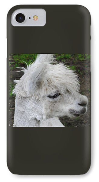 Baby Llama IPhone Case by Ellen Henneke