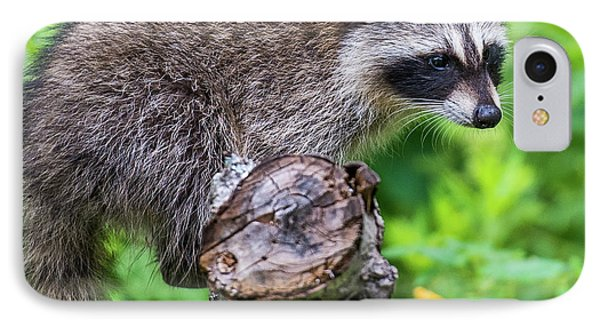IPhone Case featuring the photograph Baby Racoon by Paul Freidlund