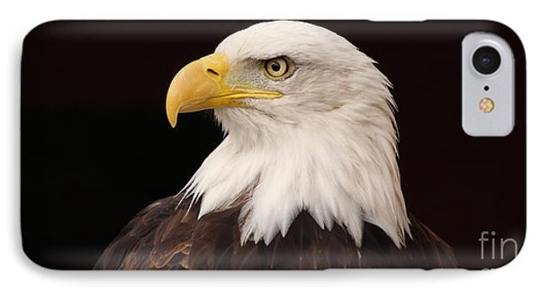 Bald Eagle IPhone Case by David Warrington